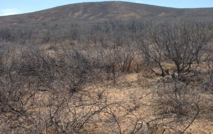 Foto de terreno habitacional en venta en, el carrizalillo, riva palacio, chihuahua, 895123 no 06