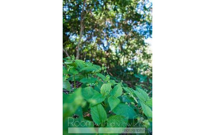 Foto de terreno habitacional en venta en  , el cielo, solidaridad, quintana roo, 1001007 No. 02