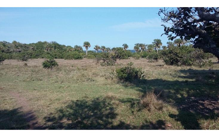 Foto de terreno comercial en venta en  , el copital, medellín, veracruz de ignacio de la llave, 2628505 No. 02