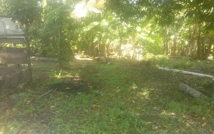 Foto de terreno habitacional en venta en  , el limón, paraíso, tabasco, 1323531 No. 02