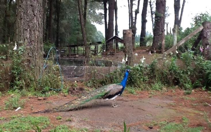 Foto de terreno habitacional en venta en  , el manzano, valle de bravo, méxico, 829595 No. 09