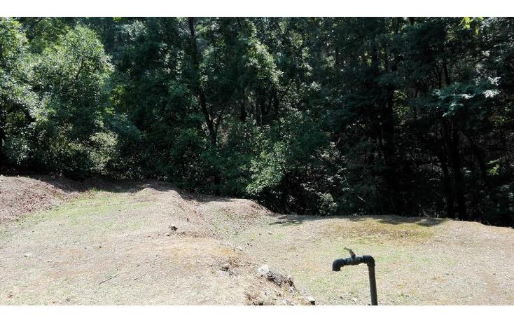Foto de terreno habitacional en venta en  , el mezcal, tzitzio, michoacán de ocampo, 1998062 No. 01