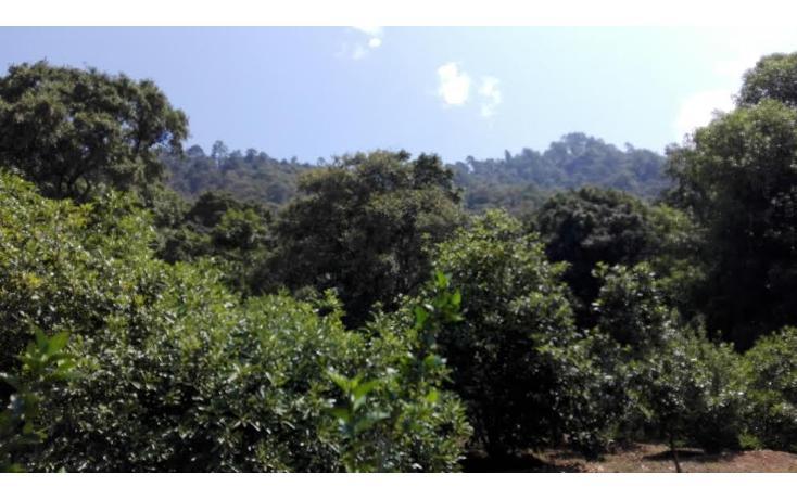 Foto de terreno habitacional en venta en  , el mezcal, tzitzio, michoacán de ocampo, 1998062 No. 03