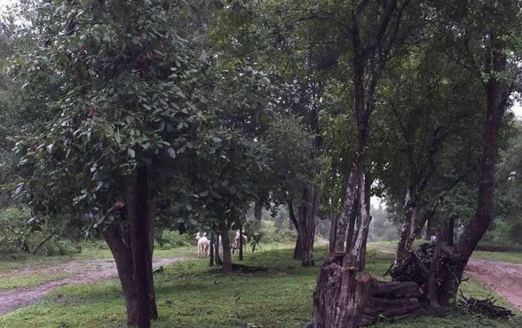 Foto de terreno habitacional en venta en, el pastor, montemorelos, nuevo león, 2004136 no 04