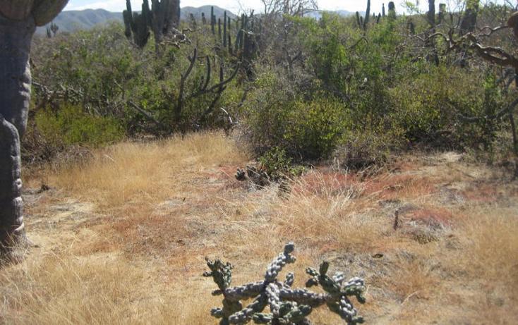 Foto de terreno habitacional en venta en  , el pescadero, la paz, baja california sur, 1254273 No. 14