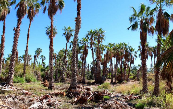 Foto de terreno habitacional en venta en  , el pescadero, la paz, baja california sur, 1273465 No. 14