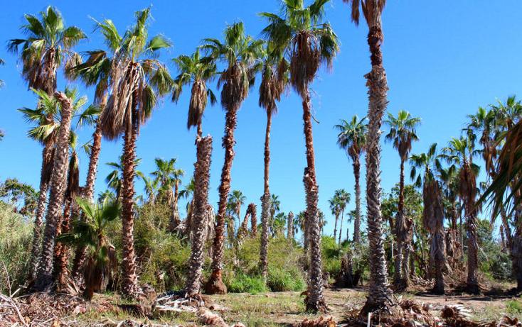Foto de terreno habitacional en venta en  , el pescadero, la paz, baja california sur, 1273465 No. 15