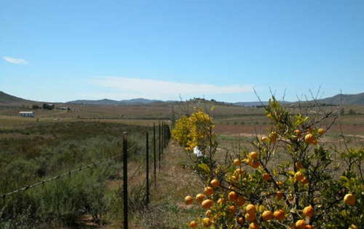 Foto de terreno habitacional en venta en  , el porvenir, ensenada, baja california, 1271707 No. 04