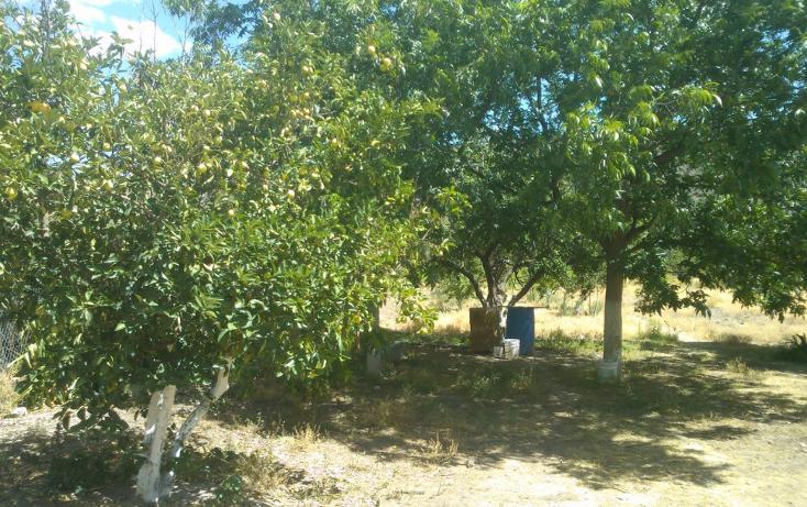 Foto de rancho en venta en  , el pueblito, durango, durango, 1363283 No. 05