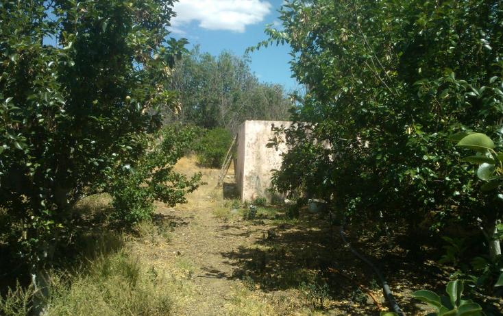 Foto de rancho en venta en  , el pueblito, durango, durango, 1363283 No. 11