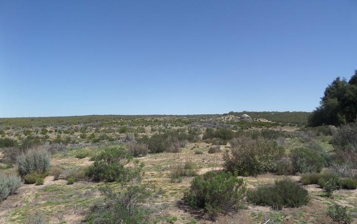 Foto de terreno comercial en venta en  , el refugio, tecate, baja california, 1191941 No. 11