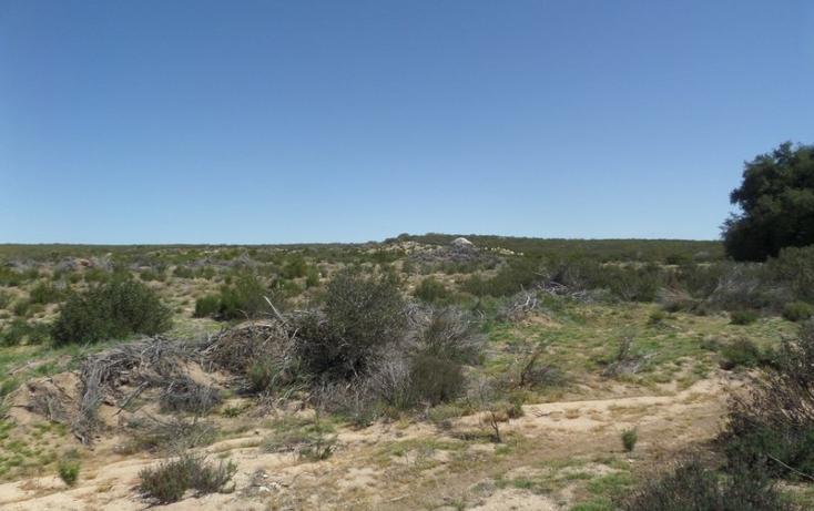 Foto de terreno comercial en venta en  , el refugio, tecate, baja california, 1191941 No. 19