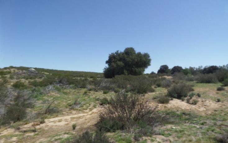 Foto de terreno comercial en venta en  , el refugio, tecate, baja california, 1191941 No. 21