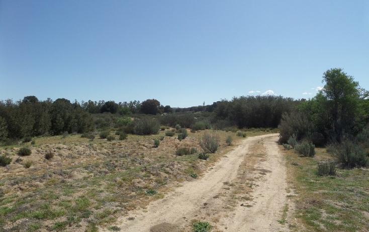 Foto de terreno comercial en venta en  , el refugio, tecate, baja california, 1191941 No. 26