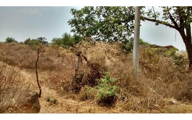 Foto de terreno comercial en venta en  , el sabino, marcos castellanos, michoac?n de ocampo, 2015896 No. 01