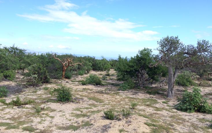 Foto de terreno habitacional en venta en  , el sargento, la paz, baja california sur, 1177203 No. 26