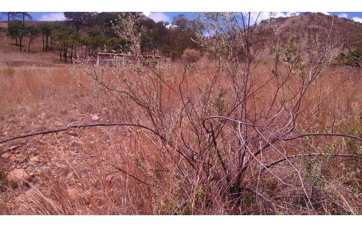 Foto de terreno habitacional en venta en el taray predio rustico el taraysn 00, el taray, tamazula de gordiano, jalisco, 1703530 no 15