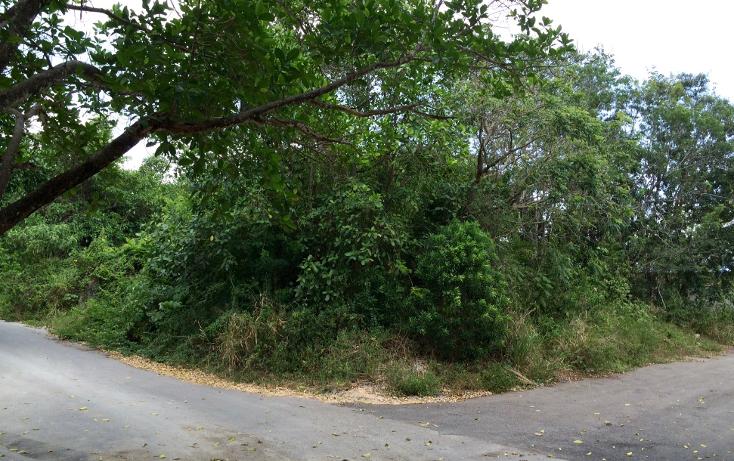 Foto de terreno habitacional en venta en  , el tigrillo, solidaridad, quintana roo, 1771450 No. 01