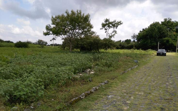 Foto de terreno habitacional en venta en  , el venadito, ayala, morelos, 1304483 No. 02