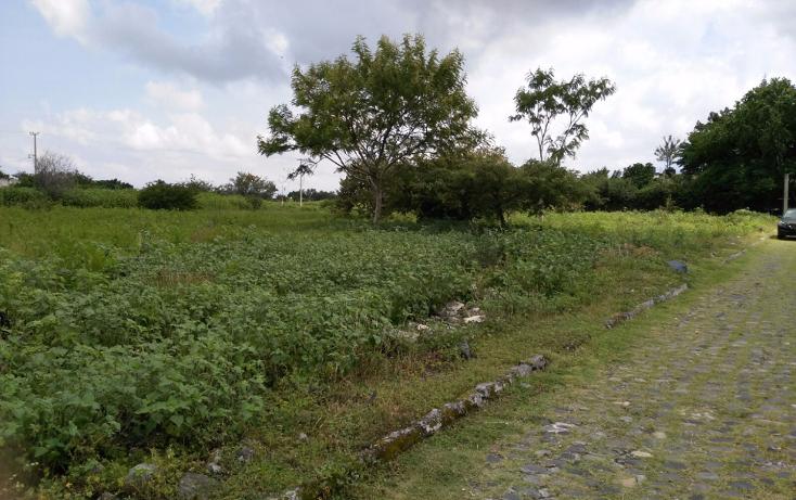 Foto de terreno habitacional en venta en  , el venadito, ayala, morelos, 1304483 No. 04