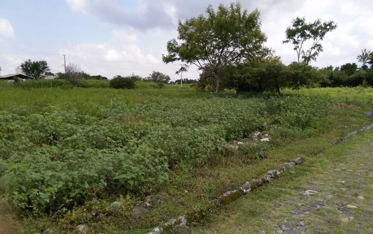 Foto de terreno habitacional en venta en  , el venadito, ayala, morelos, 1304483 No. 06