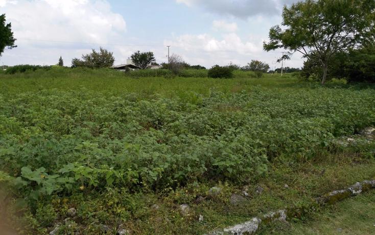 Foto de terreno habitacional en venta en  , el venadito, ayala, morelos, 1304483 No. 07