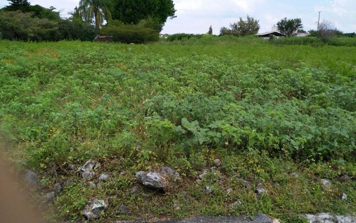 Foto de terreno habitacional en venta en  , el venadito, ayala, morelos, 1304483 No. 08