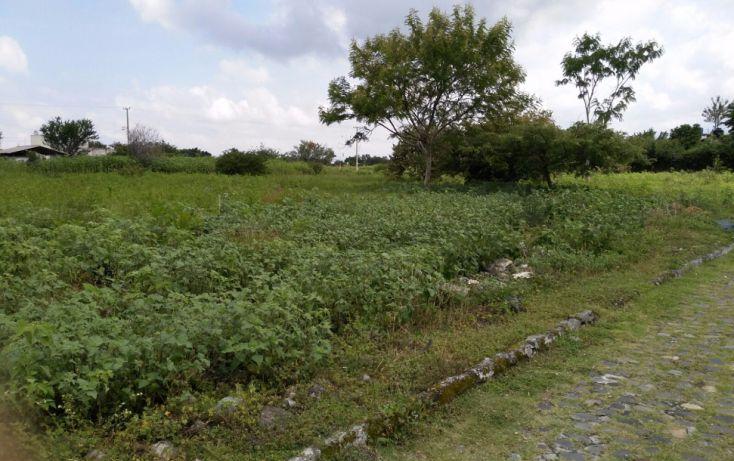 Foto de terreno habitacional en venta en, el venadito, ayala, morelos, 2028039 no 06