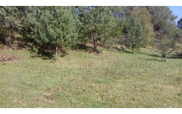 Foto de terreno comercial en venta en  , estanzuela, altotonga, veracruz de ignacio de la llave, 1787952 No. 02