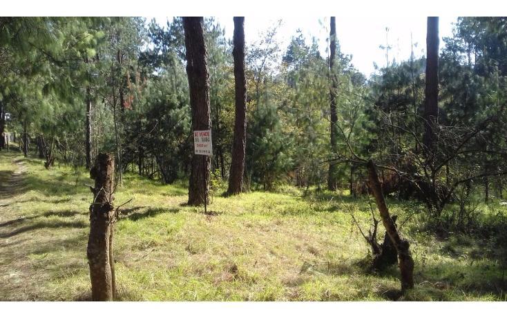 Foto de terreno comercial en venta en  , estanzuela, altotonga, veracruz de ignacio de la llave, 1787952 No. 06