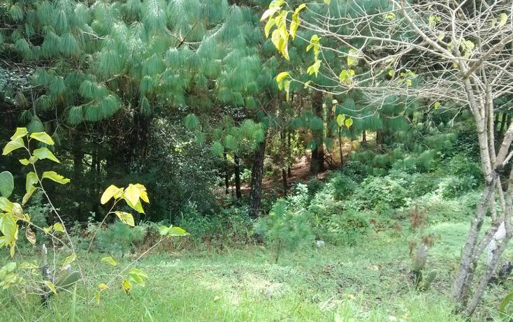 Foto de terreno habitacional en venta en  , explanada del carmen, san crist?bal de las casas, chiapas, 639145 No. 06