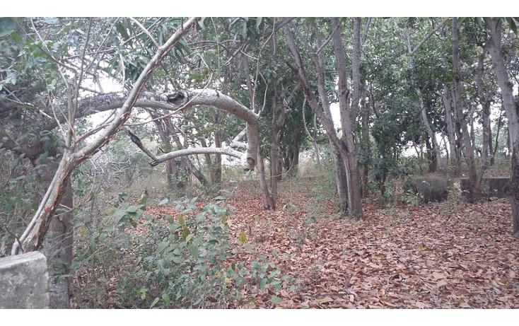 Foto de terreno comercial en venta en  , francisco medrano, altamira, tamaulipas, 1730412 No. 05