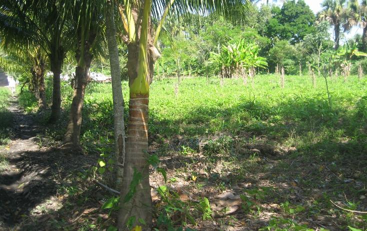 Foto de terreno comercial en venta en  , gonzalez 1a secc, centro, tabasco, 1334771 No. 05