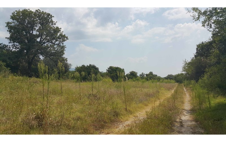 Foto de rancho en venta en  , gonzalez, gonzález, tamaulipas, 1421017 No. 06