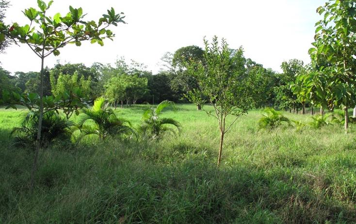 Foto de terreno habitacional en venta en  , guasimal, medellín, veracruz de ignacio de la llave, 1275017 No. 03