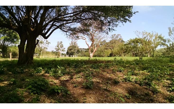 Foto de terreno habitacional en venta en  , guasimal, medellín, veracruz de ignacio de la llave, 1275017 No. 04