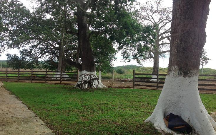 Foto de rancho en venta en  , hecelchakan, hecelchakán, campeche, 1302797 No. 12