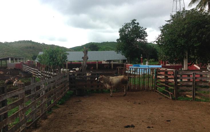 Foto de rancho en venta en  , hecelchakan, hecelchakán, campeche, 1302797 No. 13
