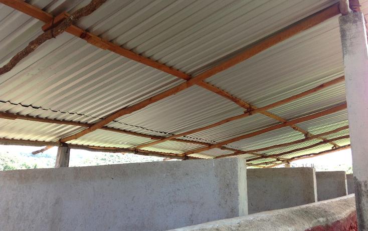 Foto de rancho en venta en  , hecelchakan, hecelchakán, campeche, 1302797 No. 14