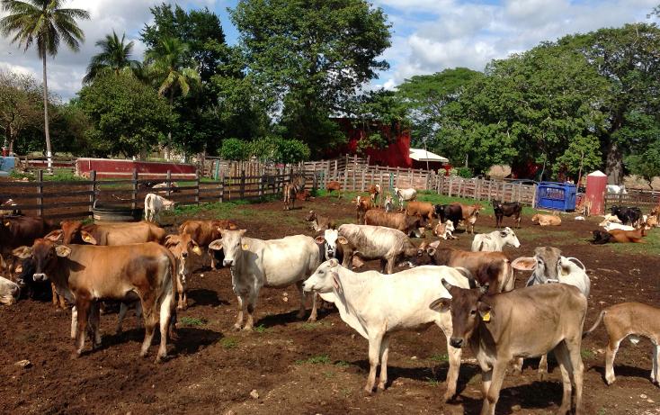 Foto de rancho en venta en  , hecelchakan, hecelchakán, campeche, 1302797 No. 16