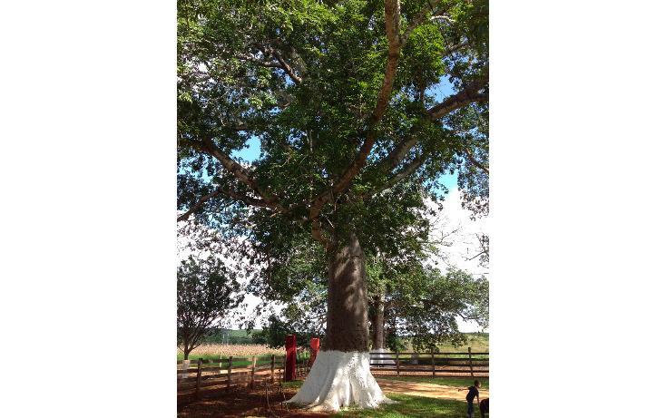 Foto de rancho en venta en  , hecelchakan, hecelchakán, campeche, 1302797 No. 22