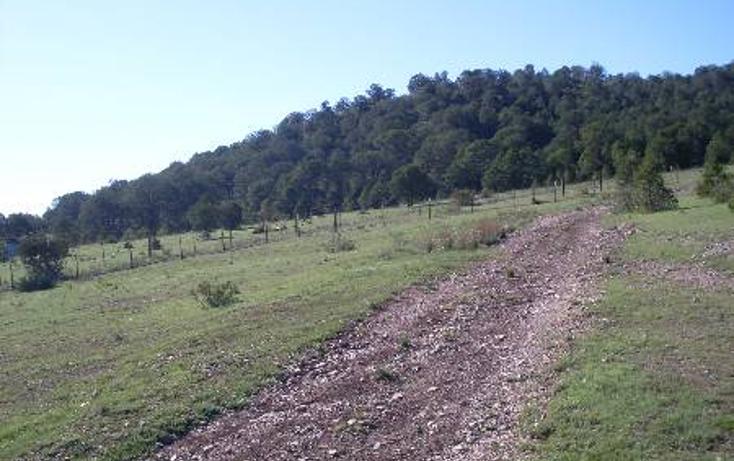 Foto de terreno habitacional en venta en  , huachichil, arteaga, coahuila de zaragoza, 1149861 No. 08