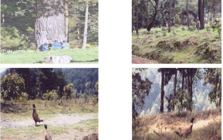 Foto de terreno comercial en venta en huerta aguacatera 10, zirimondiro, tancítaro, michoacán de ocampo, 1685242 no 08