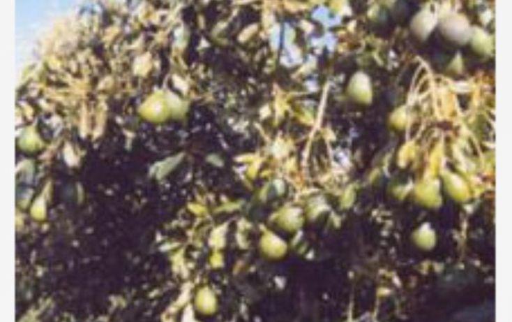 Foto de terreno comercial en venta en huerta aguacatera 10, zirimondiro, tancítaro, michoacán de ocampo, 1685242 no 14