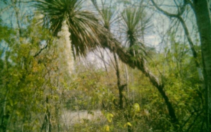 Foto de rancho en venta en  , huertas estación, montemorelos, nuevo león, 1180717 No. 04