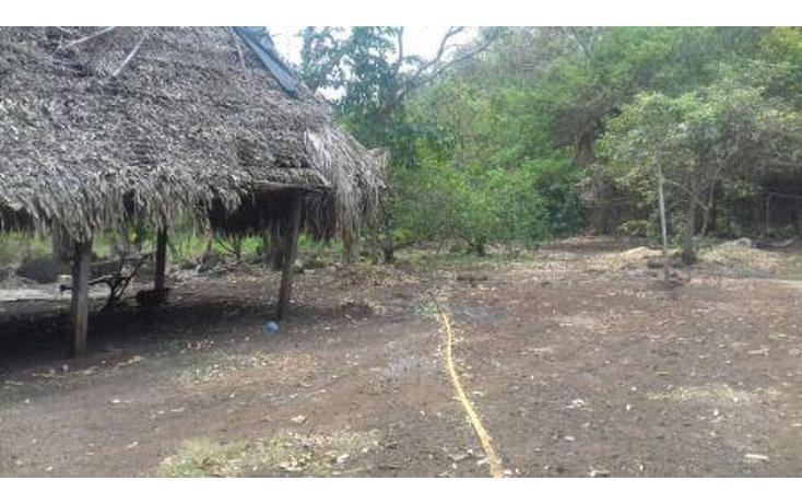 Foto de rancho en venta en  , hueyapan de ocampo, hueyapan de ocampo, veracruz de ignacio de la llave, 1288279 No. 06