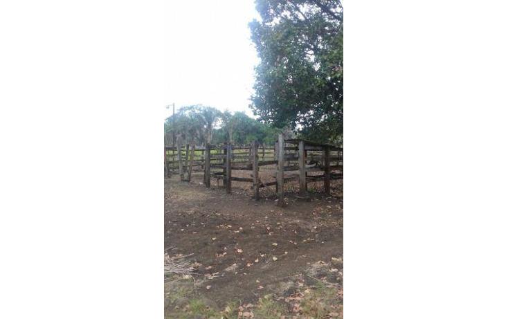 Foto de rancho en venta en  , hueyapan de ocampo, hueyapan de ocampo, veracruz de ignacio de la llave, 1288279 No. 09