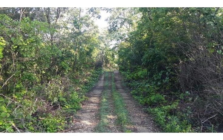Foto de terreno comercial en venta en  , hunucmá, hunucmá, yucatán, 1392451 No. 02