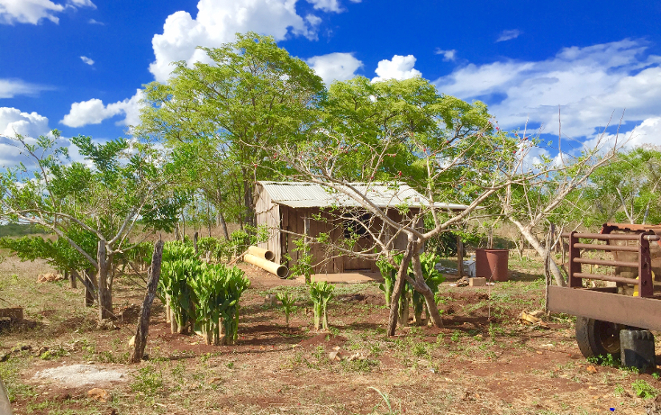 Foto de rancho en venta en  , ich-ek, hopelchén, campeche, 1259571 No. 03