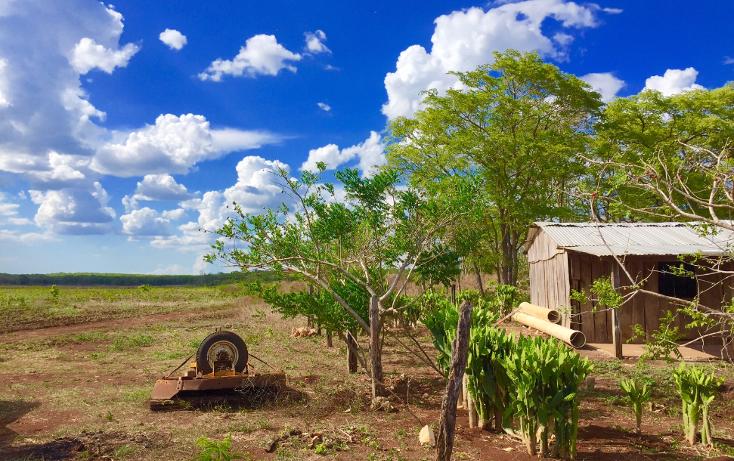 Foto de rancho en venta en  , ich-ek, hopelchén, campeche, 1259571 No. 06
